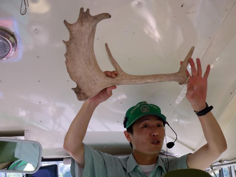 『日本。大分縣』 九州自然野生動物園|藏身叢林巴士深入九州自然野生動物園演一場猛獸餵食秀|2018/0711-0714 北九州市大分宮崎 SUNQ PASS四日券 巴士之旅趴趴走。
