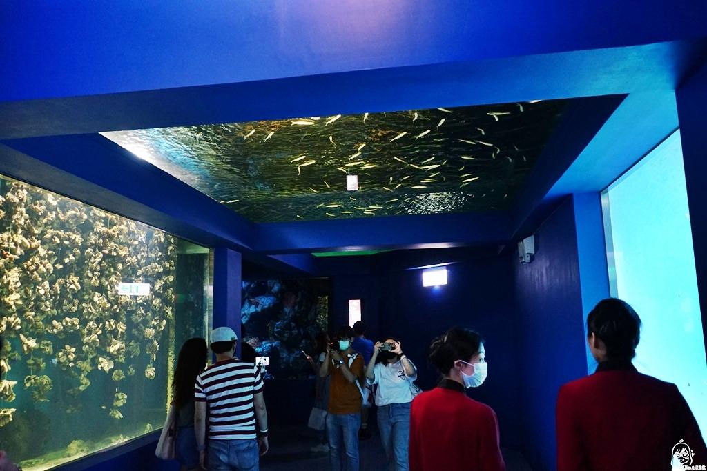 『桃園。青埔』八景島水族館 Xpark水生公園|8月7號正式開幕 桃園最大也最美的水族館 超值必看重點懶人包!