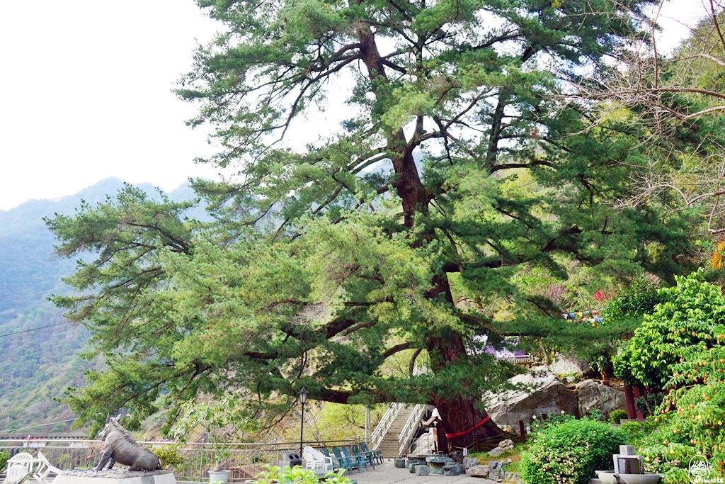 『台中。和平』 谷關溫泉推薦 神木谷假期大飯店|國寶級千年五葉松神木下的百年湯溫泉飯店  兩天一夜溫泉美食之旅懶人包。