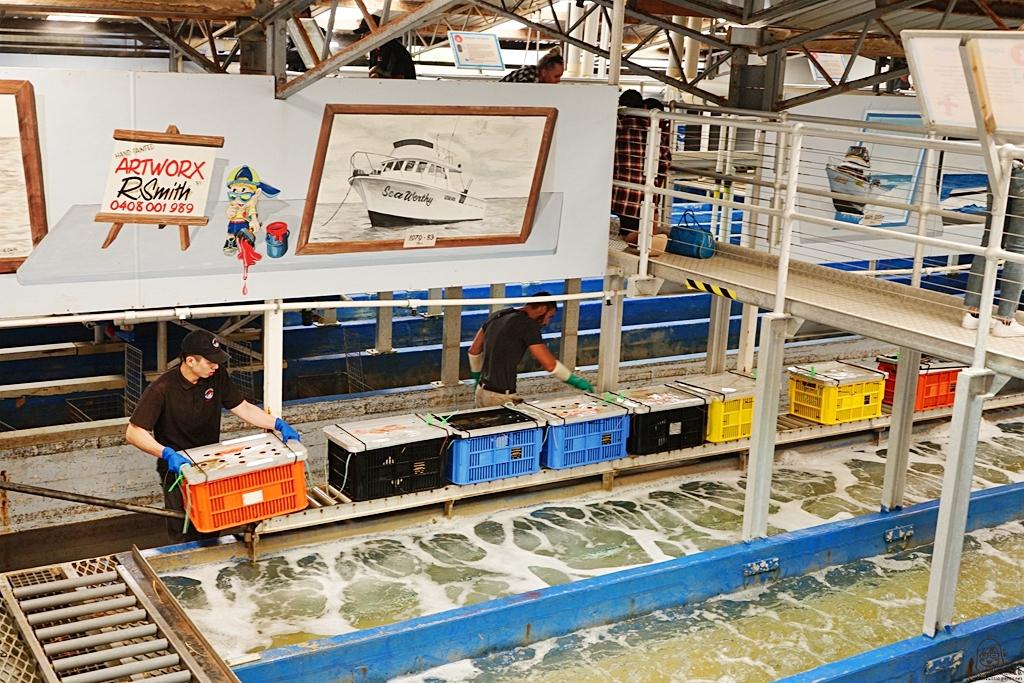 『澳洲。西澳』 Lobster Shack Cervantes 龍蝦工廠|專門捕撈龍蝦而聞名全球海港的龍蝦鎮美味傳奇  岩石龍蝦新鮮Q彈多汁  柏斯北部必吃美食 |雄獅 玩轉西澳 七日 粉紅湖 沙漠小探險之旅