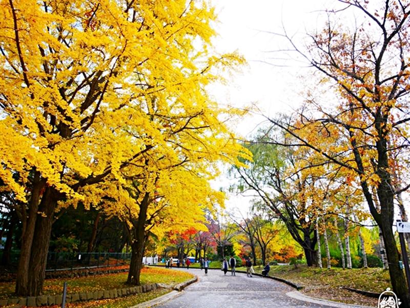 『日本   北海道』  札幌市區中的紅葉名所 中島公園 |  秋意濃 ,滿園的紅、黃、橘色的楓樹、銀杏等各種變葉木,妝點出如織錦般的美麗景色,讓人驚艷。|2018 1021-1102東京、東北&北海道萬聖節賞楓之旅